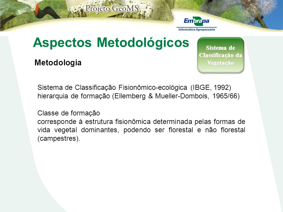 Sistema de Classificação da Vegetação