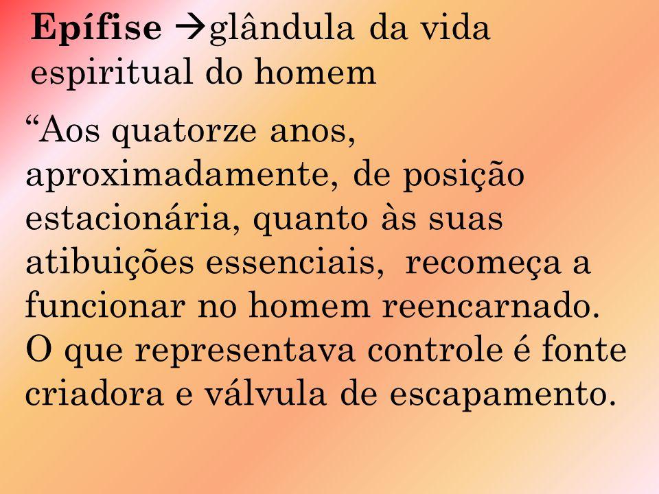 Epífise glândula da vida espiritual do homem