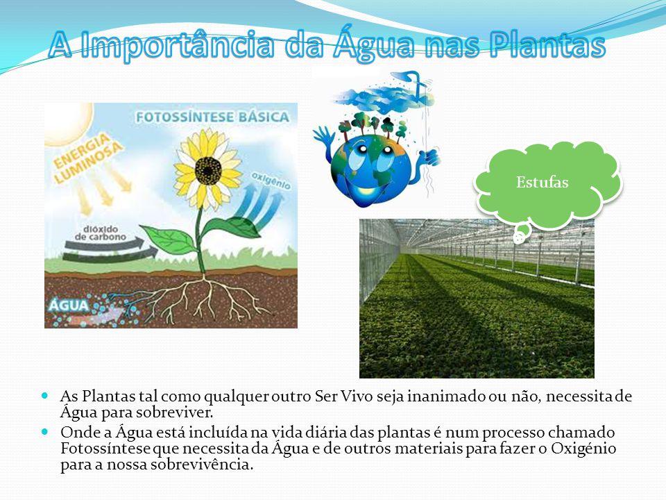 A Importância da Água nas Plantas
