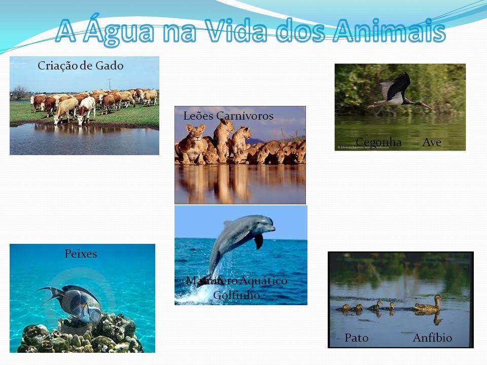A Água na Vida dos Animais