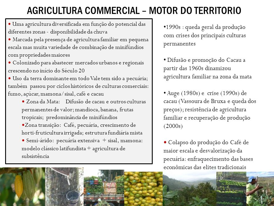 AGRICULTURA COMMERCIAL – MOTOR DO TERRITORIO