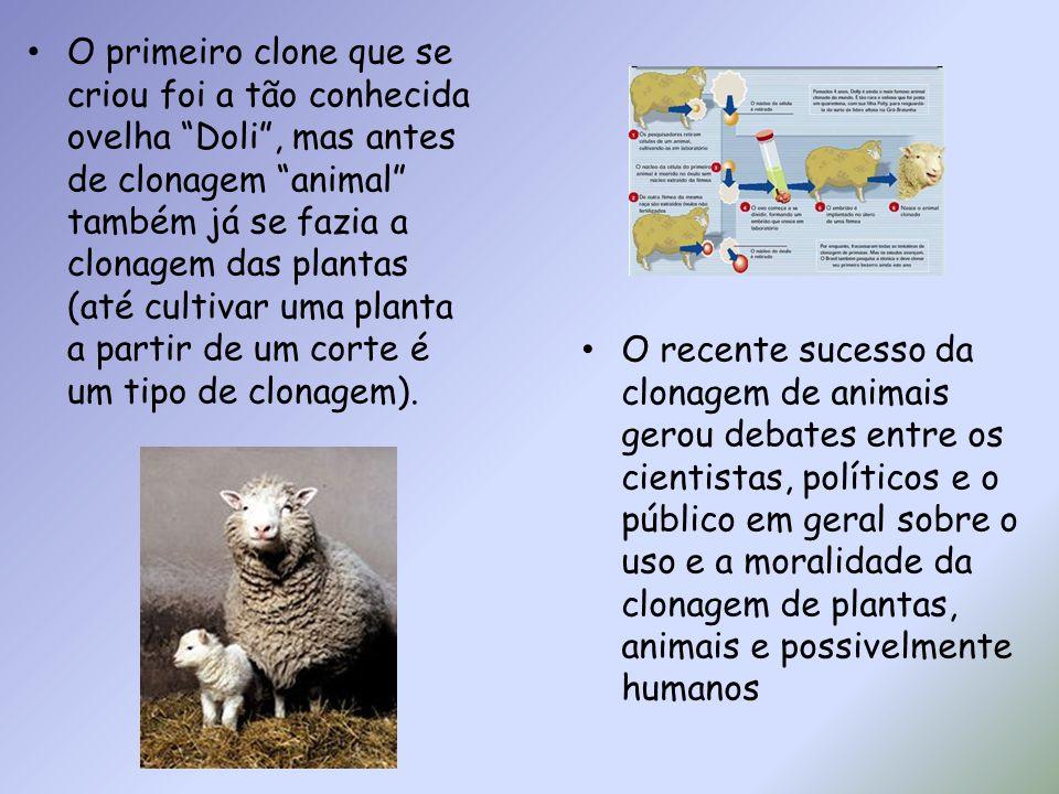 O primeiro clone que se criou foi a tão conhecida ovelha Doli , mas antes de clonagem animal também já se fazia a clonagem das plantas (até cultivar uma planta a partir de um corte é um tipo de clonagem).