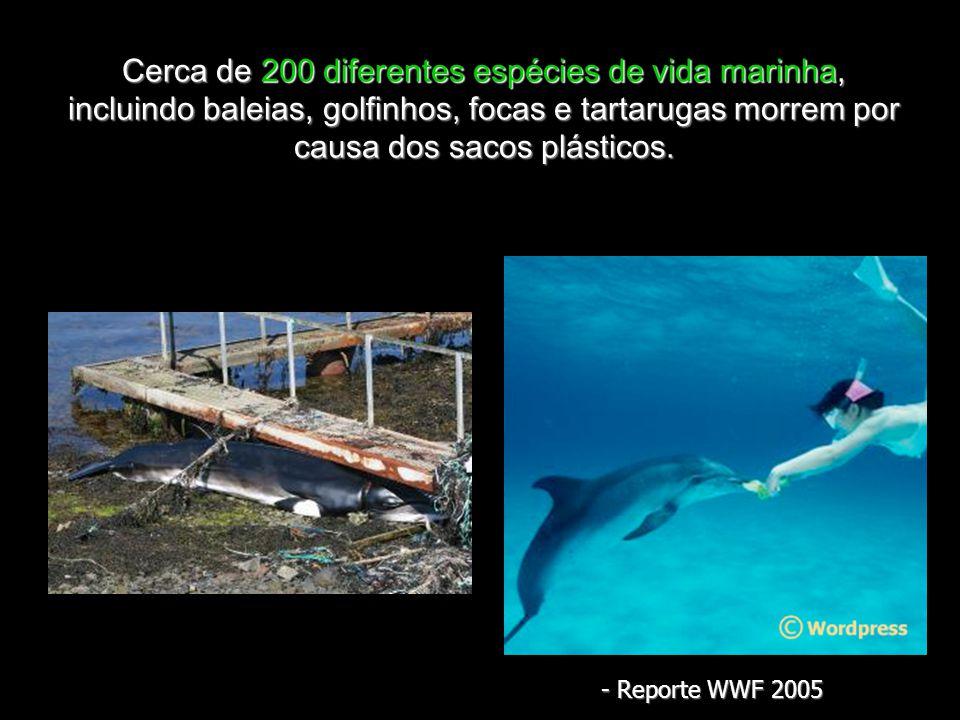 Cerca de 200 diferentes espécies de vida marinha, incluindo baleias, golfinhos, focas e tartarugas morrem por causa dos sacos plásticos.