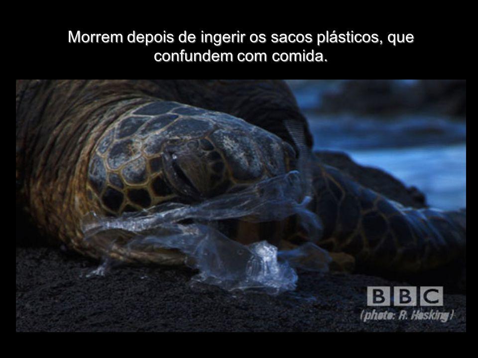 Morrem depois de ingerir os sacos plásticos, que confundem com comida.