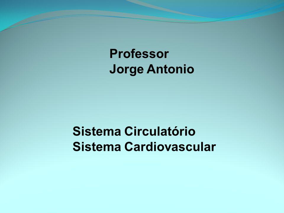 Professor Jorge Antonio Sistema Circulatório Sistema Cardiovascular