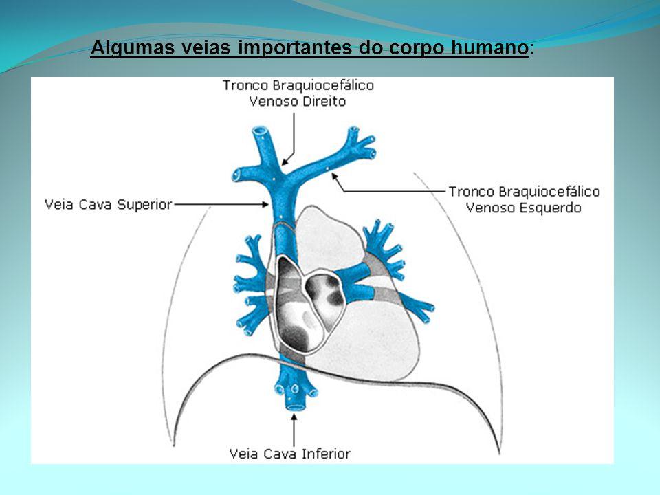 Algumas veias importantes do corpo humano: