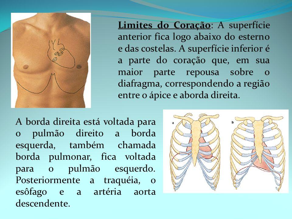 Limites do Coração: A superfície anterior fica logo abaixo do esterno e das costelas. A superfície inferior é a parte do coração que, em sua maior parte repousa sobre o diafragma, correspondendo a região entre o ápice e aborda direita.