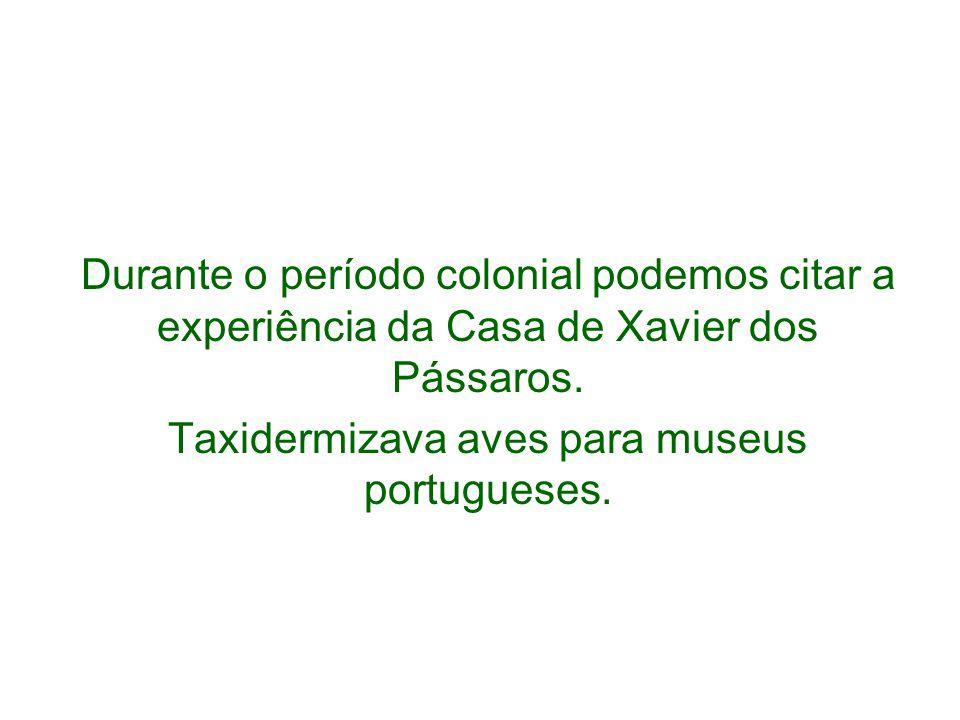 Taxidermizava aves para museus portugueses.