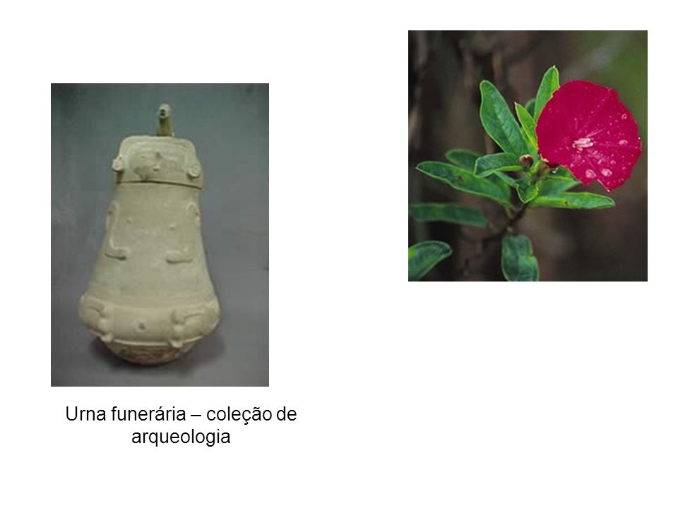Urna funerária – coleção de arqueologia