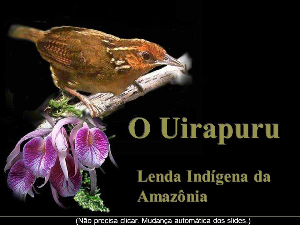 O Uirapuru Lenda Indígena da Amazônia