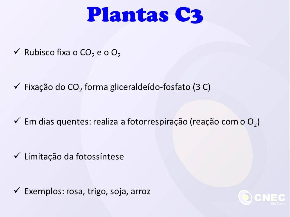Plantas C3 Rubisco fixa o CO2 e o O2