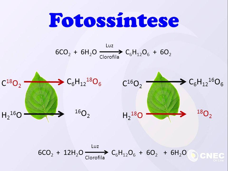 Fotossíntese C6H1218O6 C6H1216O6 C18O2 C16O2 H216O H218O 16O2 18O2