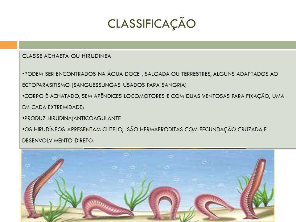 CLASSIFICAÇÃO CLASSE ACHAETA OU HIRUDINEA