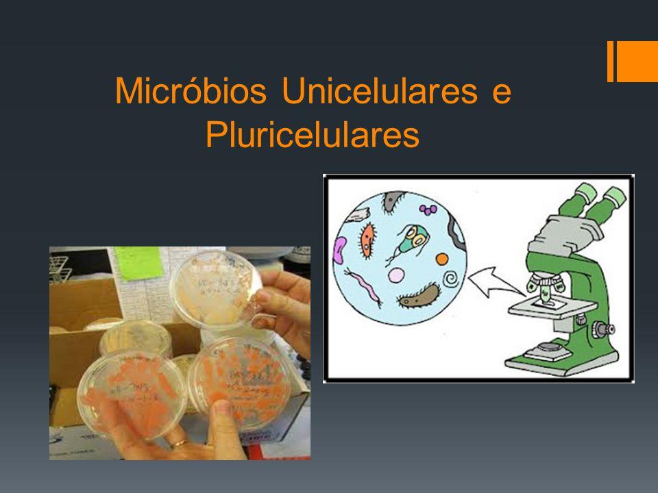 Micróbios Unicelulares e Pluricelulares