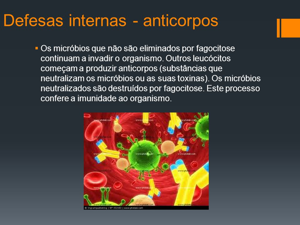 Defesas internas - anticorpos