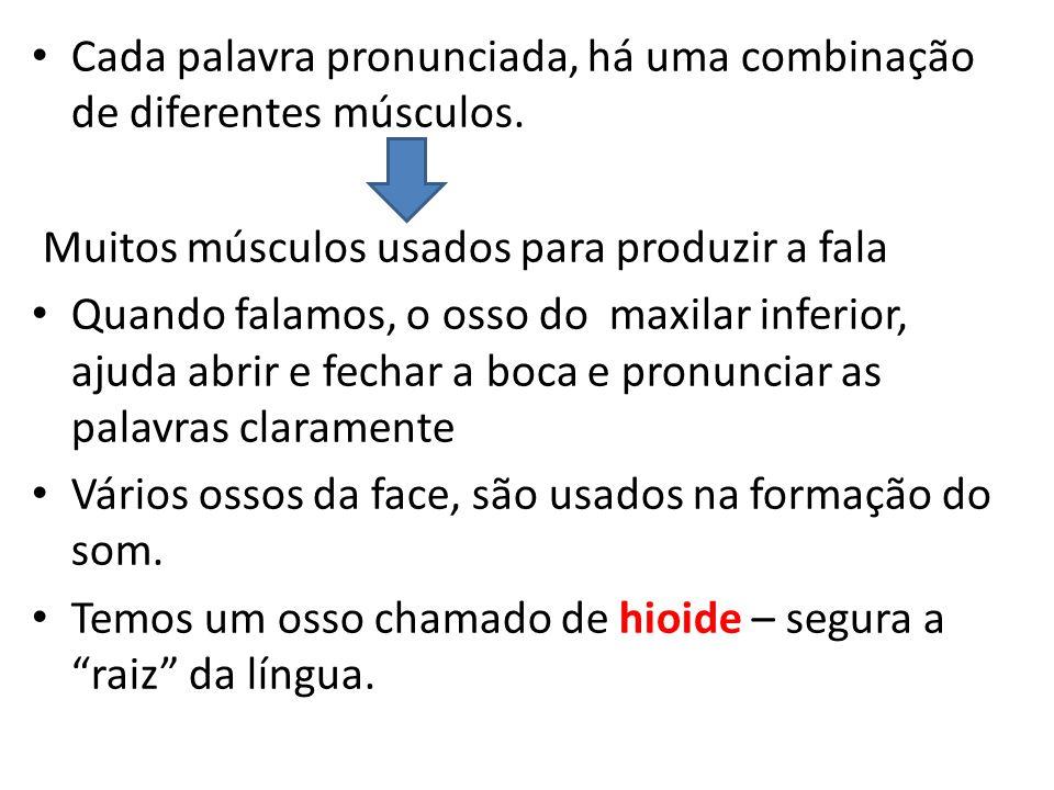 Cada palavra pronunciada, há uma combinação de diferentes músculos.