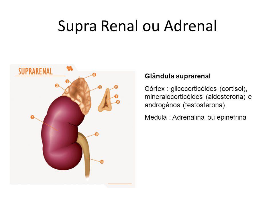 Supra Renal ou Adrenal Glândula suprarenal