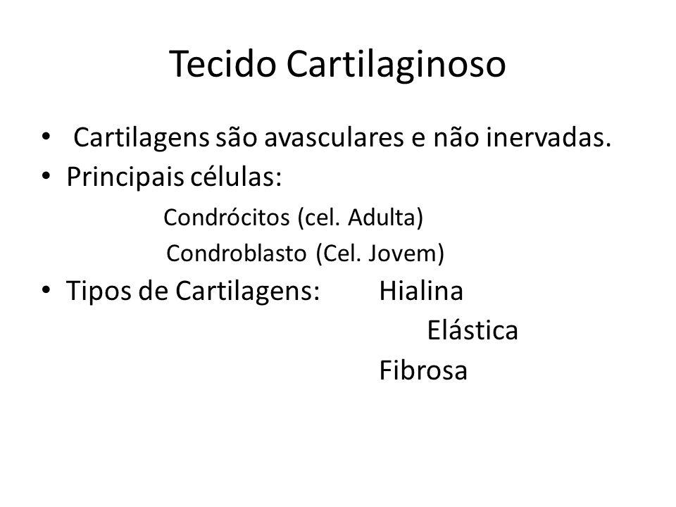 Tecido Cartilaginoso Cartilagens são avasculares e não inervadas.