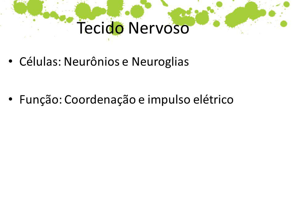 Tecido Nervoso Células: Neurônios e Neuroglias