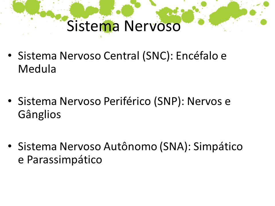 Sistema Nervoso Sistema Nervoso Central (SNC): Encéfalo e Medula
