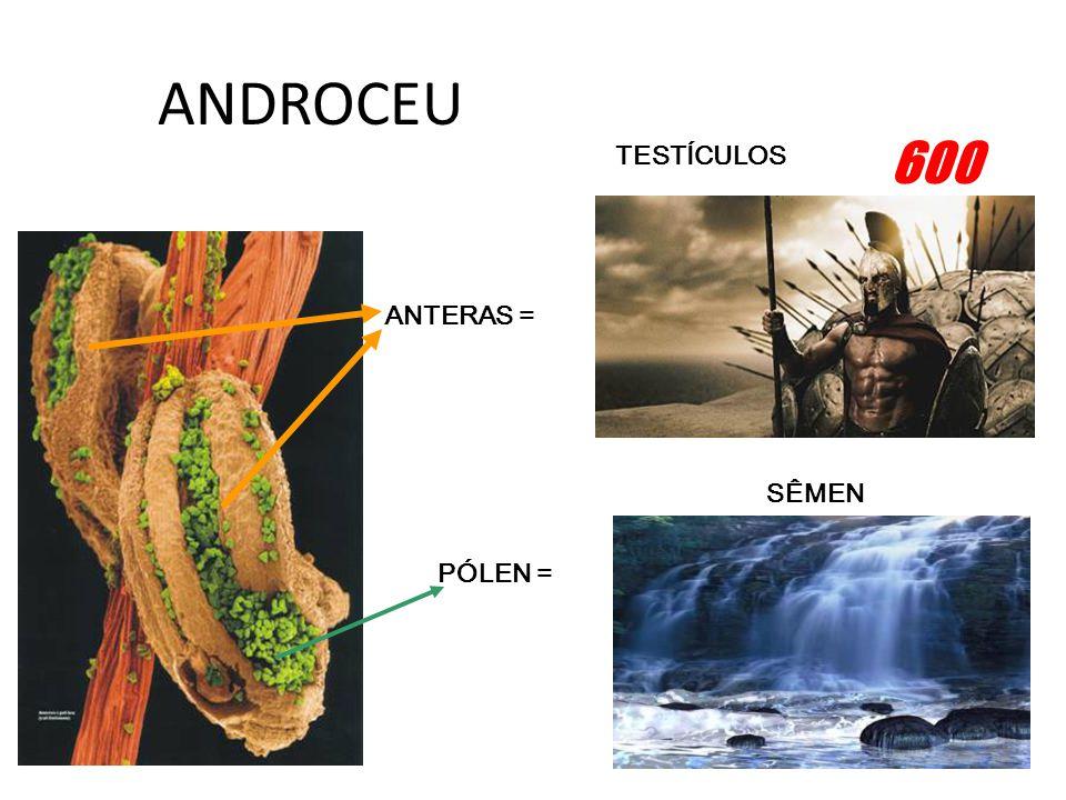 ANDROCEU 600 TESTÍCULOS ANTERAS = SÊMEN PÓLEN =