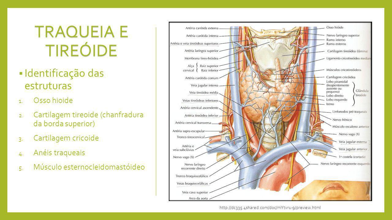 TRAQUEIA E TIREÓIDE Identificação das estruturas Osso hioide