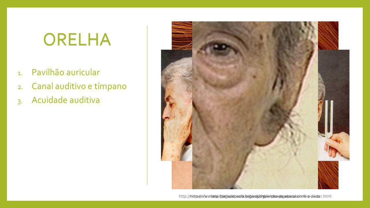 ORELHA Pavilhão auricular Canal auditivo e tímpano Acuidade auditiva