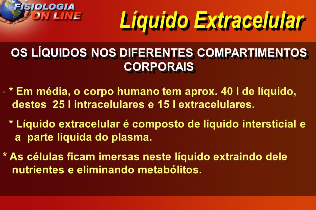 OS LÍQUIDOS NOS DIFERENTES COMPARTIMENTOS CORPORAIS