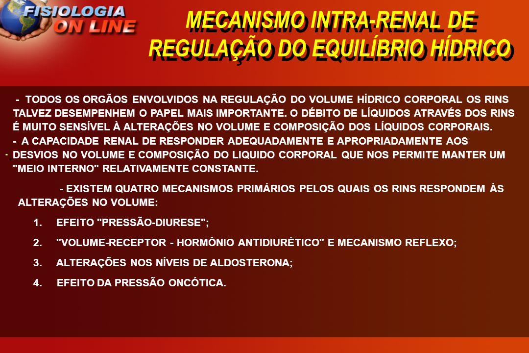 MECANISMO INTRA-RENAL DE REGULAÇÃO DO EQUILÍBRIO HÍDRICO