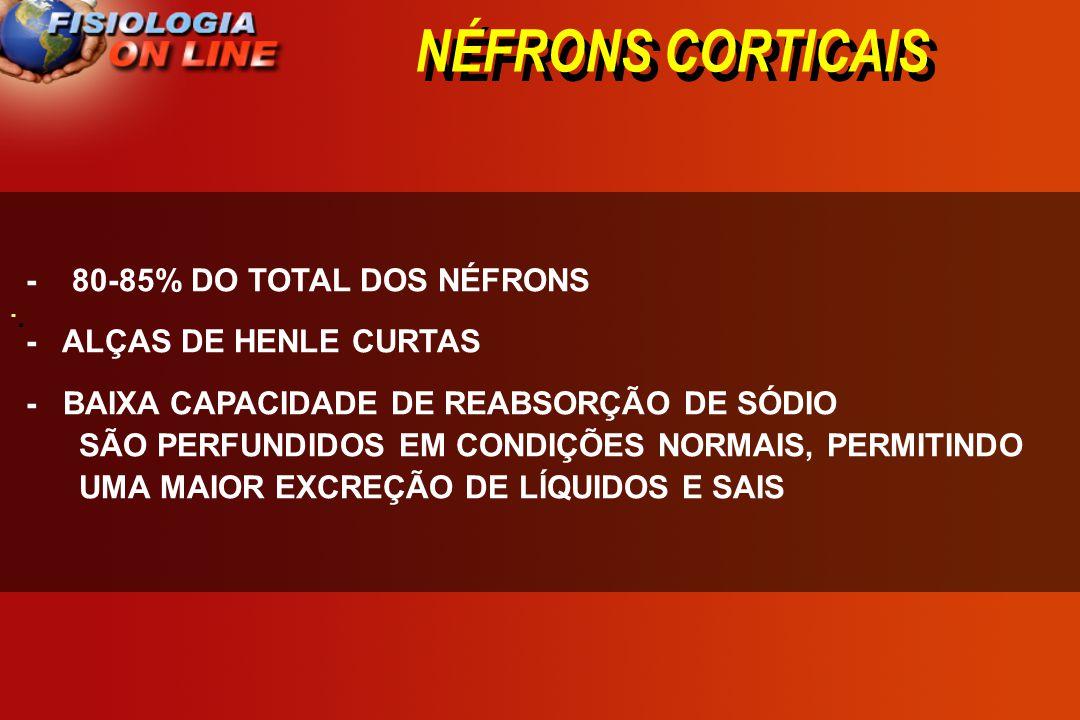NÉFRONS CORTICAIS - 80-85% DO TOTAL DOS NÉFRONS