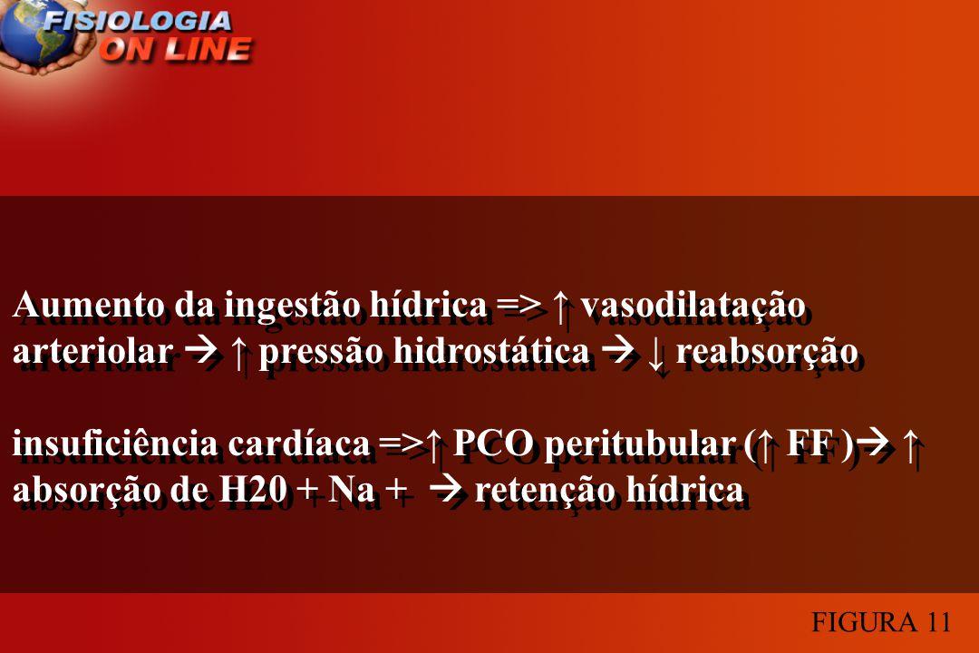 Aumento da ingestão hídrica => ↑ vasodilatação arteriolar  ↑ pressão hidrostática  ↓ reabsorção.