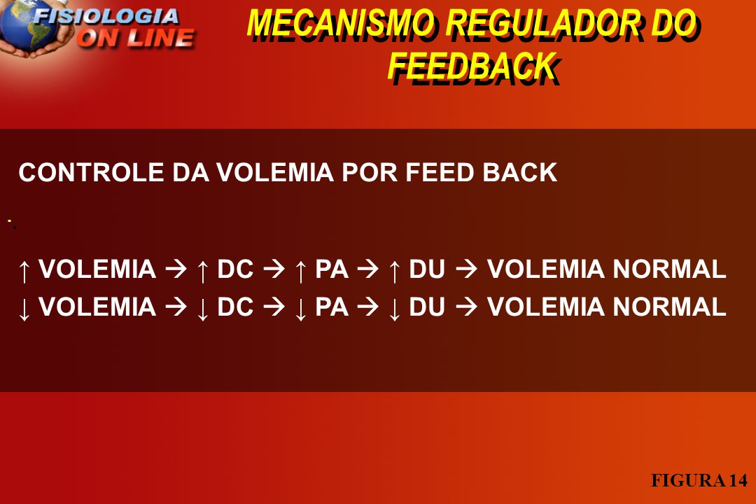 MECANISMO REGULADOR DO FEEDBACK