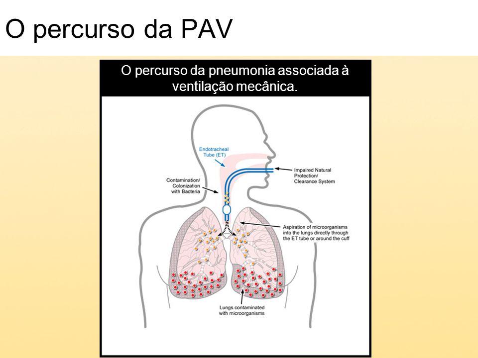 O percurso da pneumonia associada à ventilação mecânica.