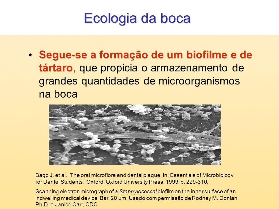 Ecologia da boca Segue-se a formação de um biofilme e de tártaro, que propicia o armazenamento de grandes quantidades de microorganismos na boca.