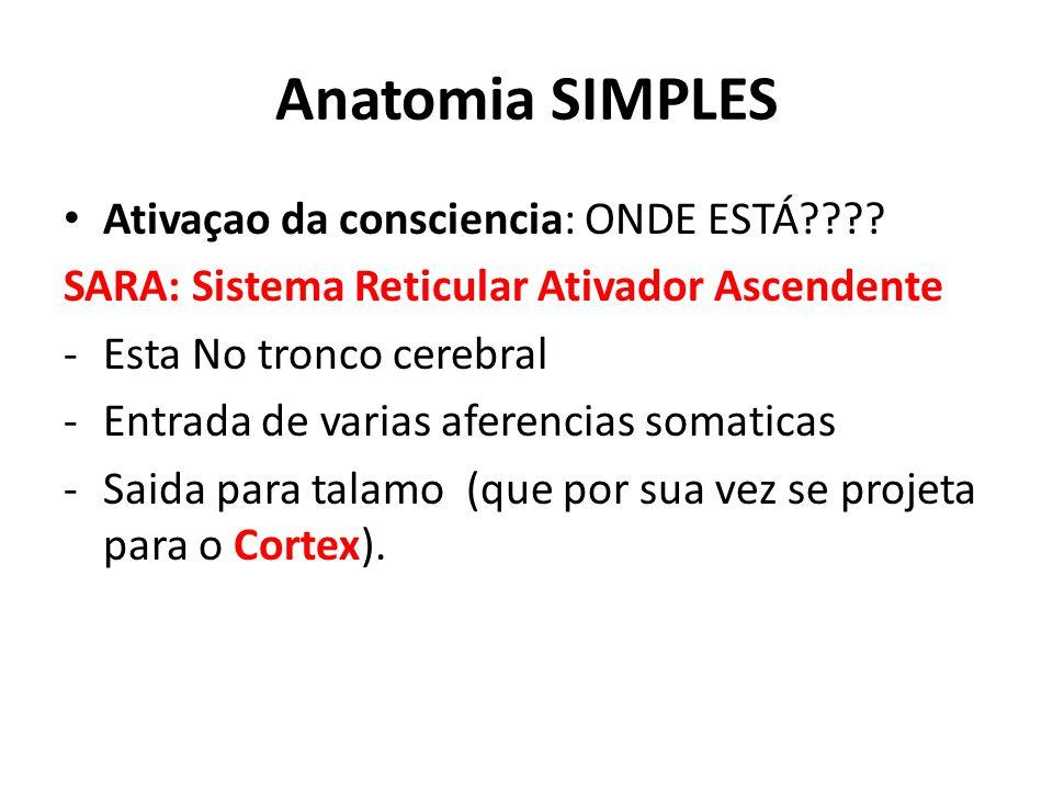 Anatomia SIMPLES Ativaçao da consciencia: ONDE ESTÁ