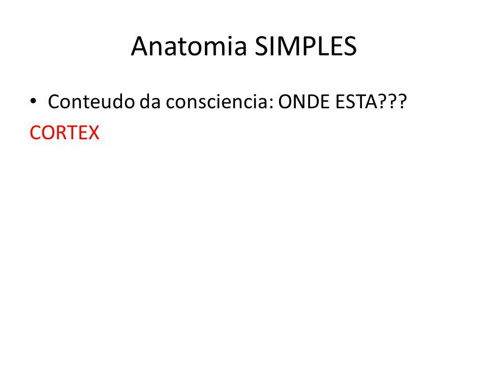 Anatomia SIMPLES Conteudo da consciencia: ONDE ESTA CORTEX