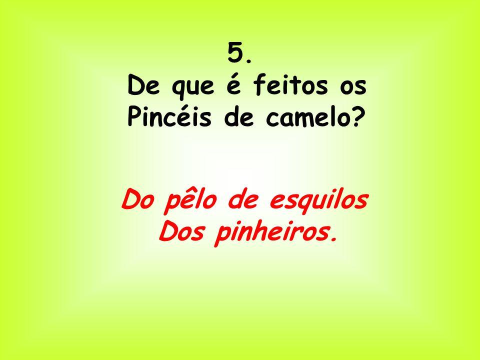 5. De que é feitos os Pincéis de camelo Do pêlo de esquilos Dos pinheiros.