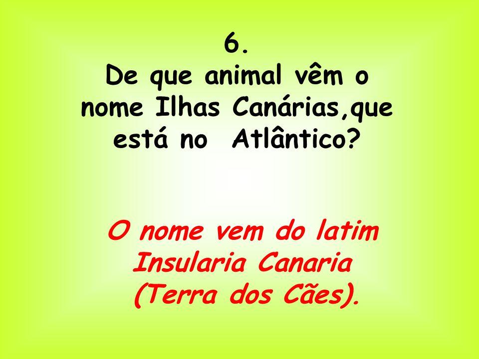 De que animal vêm o nome Ilhas Canárias,que está no Atlântico