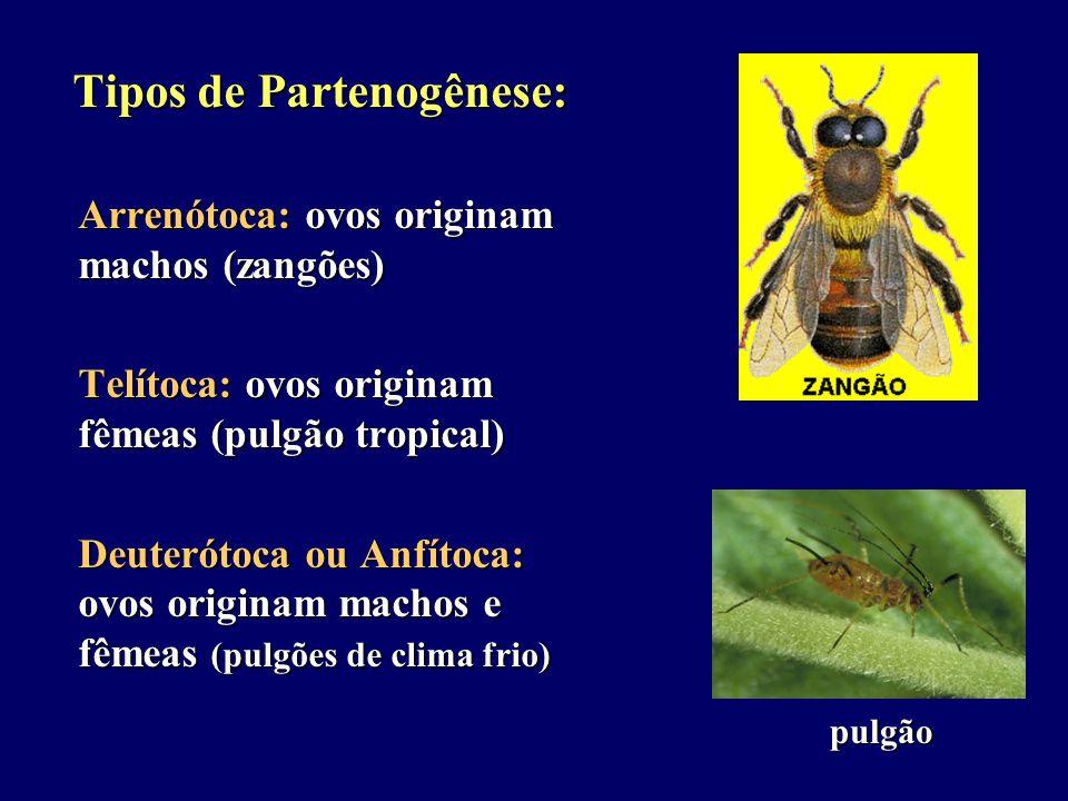 Tipos de Partenogênese: