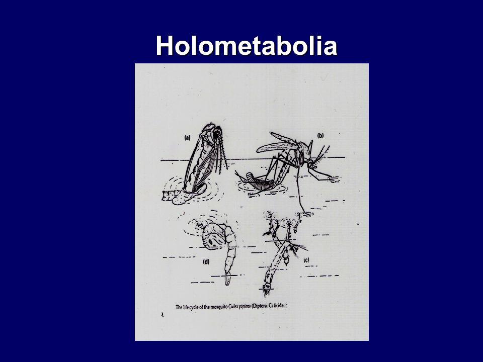 Holometabolia