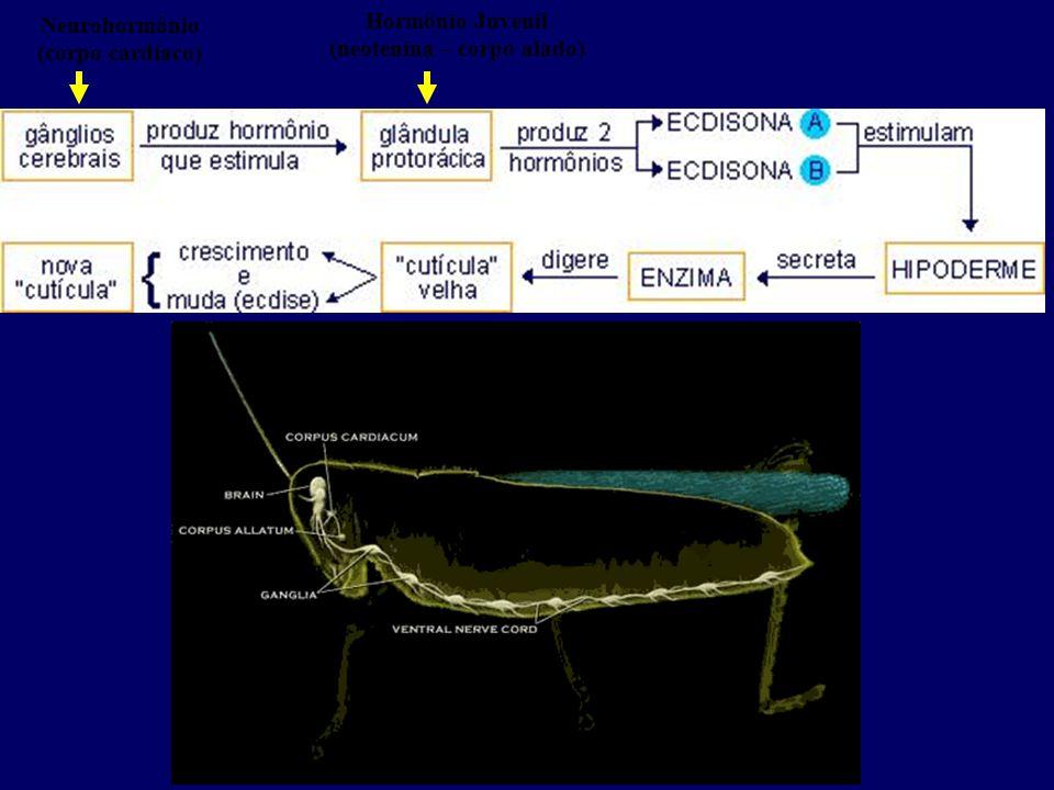 Neurohormônio (corpo cardíaco)