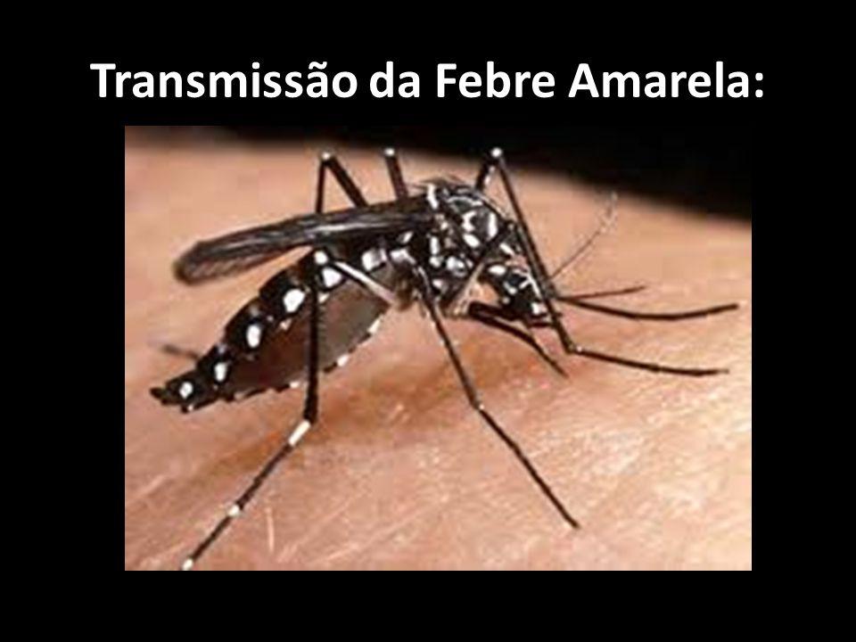 Transmissão da Febre Amarela: