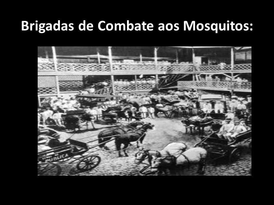 Brigadas de Combate aos Mosquitos: