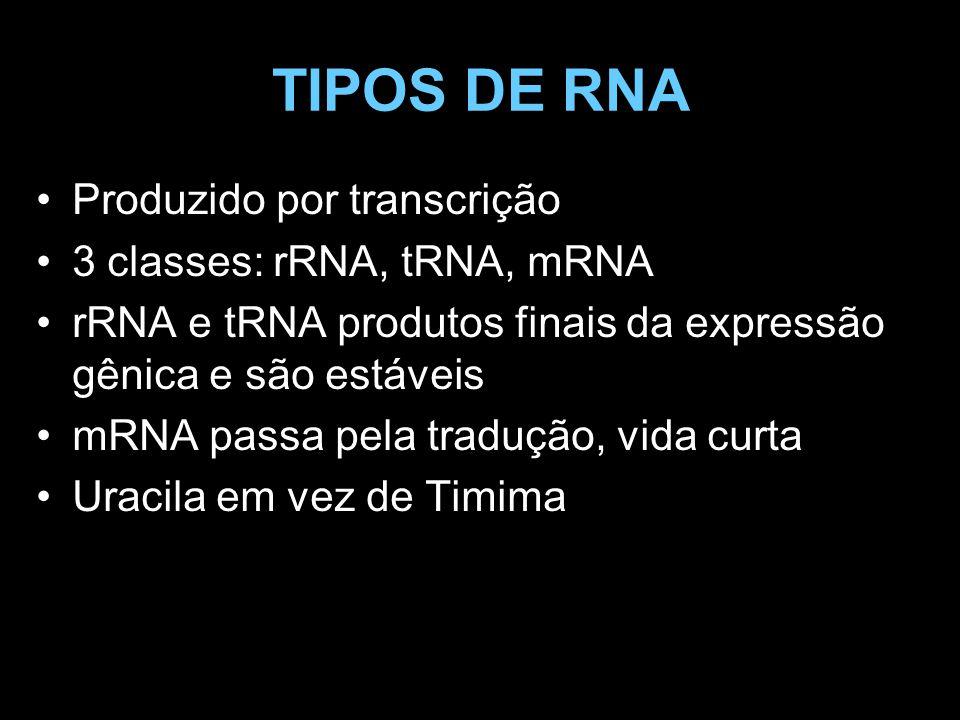 TIPOS DE RNA Produzido por transcrição 3 classes: rRNA, tRNA, mRNA
