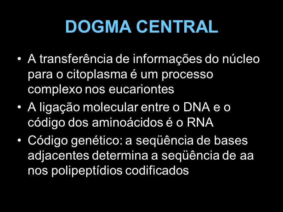 DOGMA CENTRAL A transferência de informações do núcleo para o citoplasma é um processo complexo nos eucariontes.