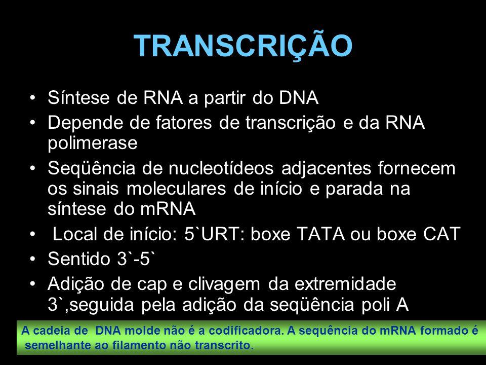 TRANSCRIÇÃO Síntese de RNA a partir do DNA