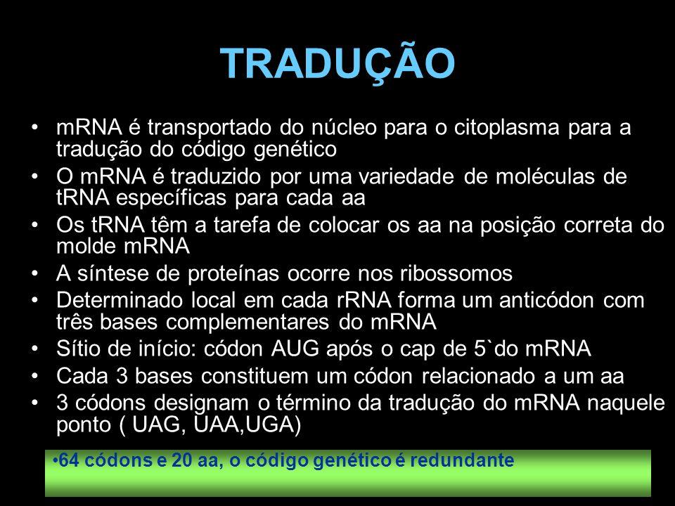 TRADUÇÃO mRNA é transportado do núcleo para o citoplasma para a tradução do código genético.
