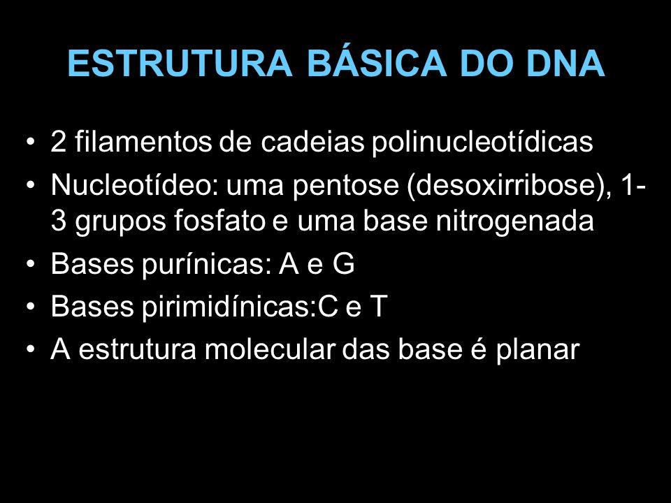 ESTRUTURA BÁSICA DO DNA