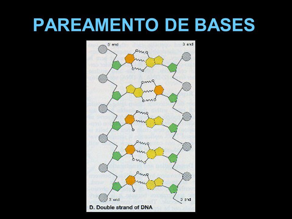 PAREAMENTO DE BASES
