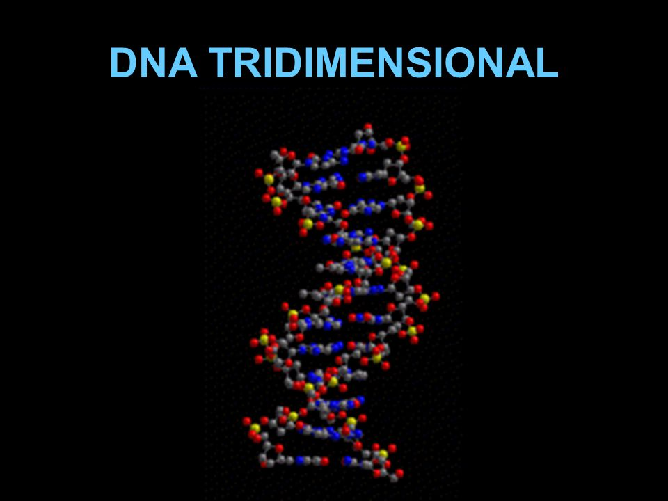 DNA TRIDIMENSIONAL
